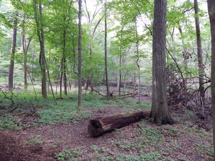 Woodland Interior #1