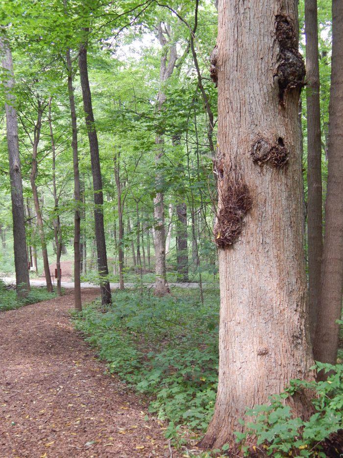 Avant-garde tree