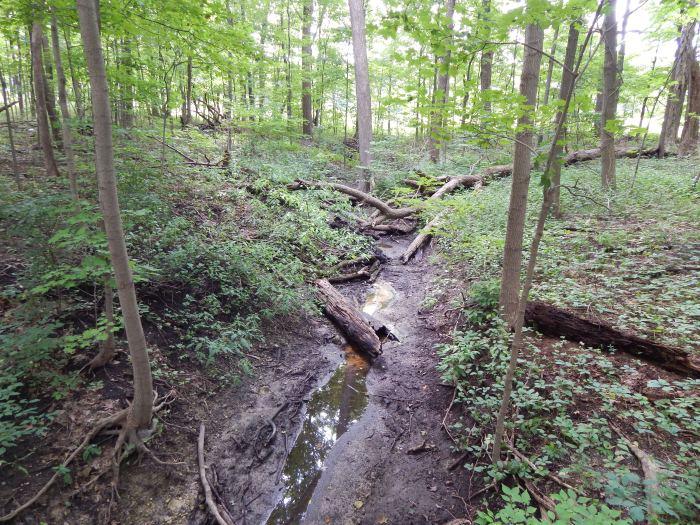 Interior Woodland #3
