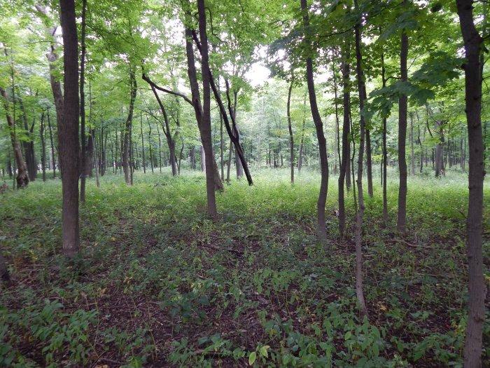 Forest Glen #1