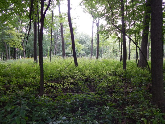 Forest Glen #2