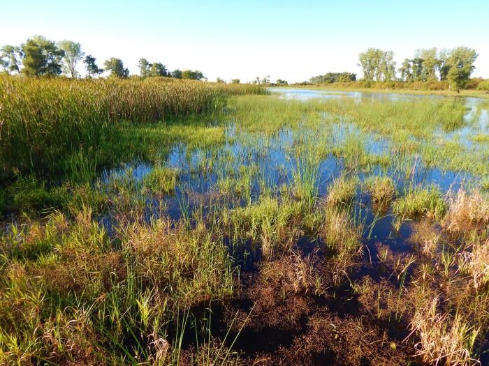 Alone at Horicon Marsh