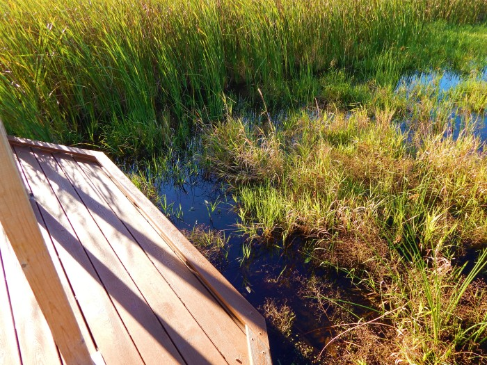 Woman Meets marsh