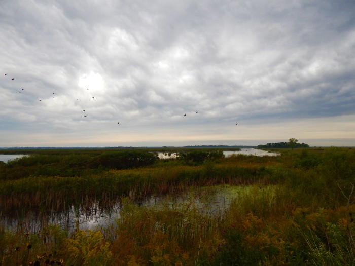 The Earth is the Lord's - Horicon Marsh, WI ©Ann Johnson Kingdom Venturers